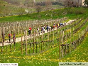 Nordic Walking S.PietroFeletto (16).jpg
