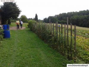 nordic-walking-montello (6).jpg