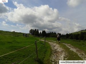 nordic-walking-gallio (14).jpg