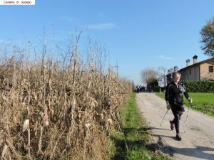 nordic-walking-castello-godego (20).jpg