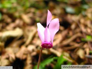 fiori-mis1.jpg